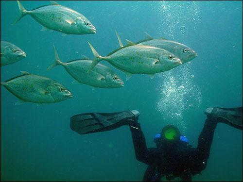 Ian diving