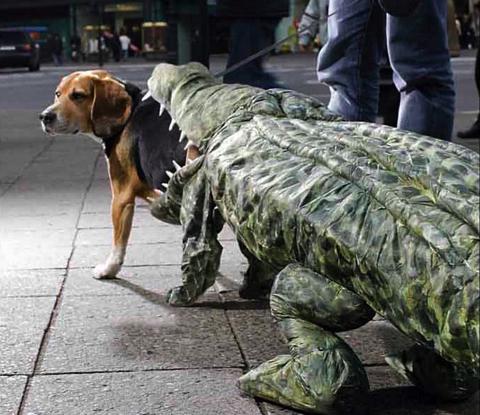 dog and gator